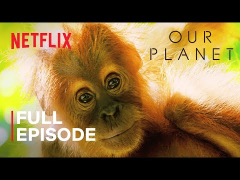 Our Planet | Jungles | FULL EPISODE | Netflix