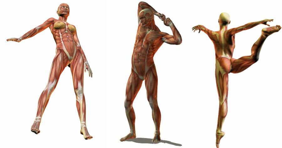 Poses cuerpo humano