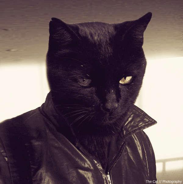 gato con chamarra
