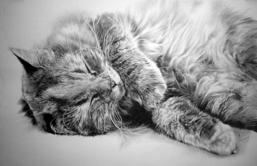 dibujo gato hiperrealista