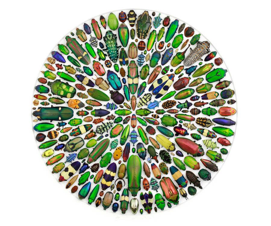 mosaicos de insectos