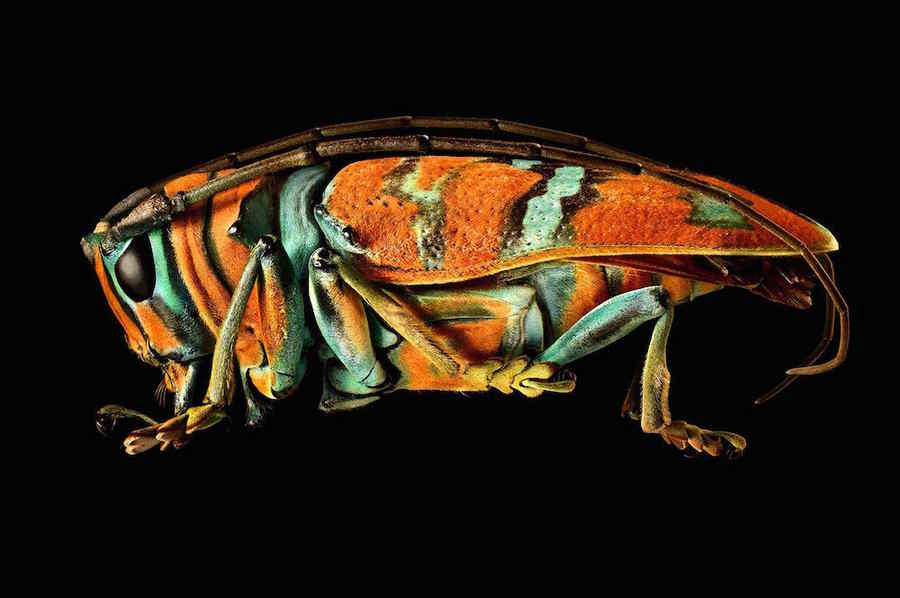 macrofotografía de insectos