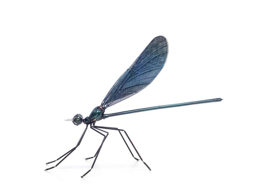 insectos de metal