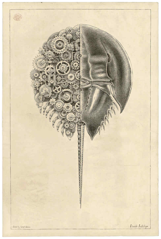 dibujos de crustáceos