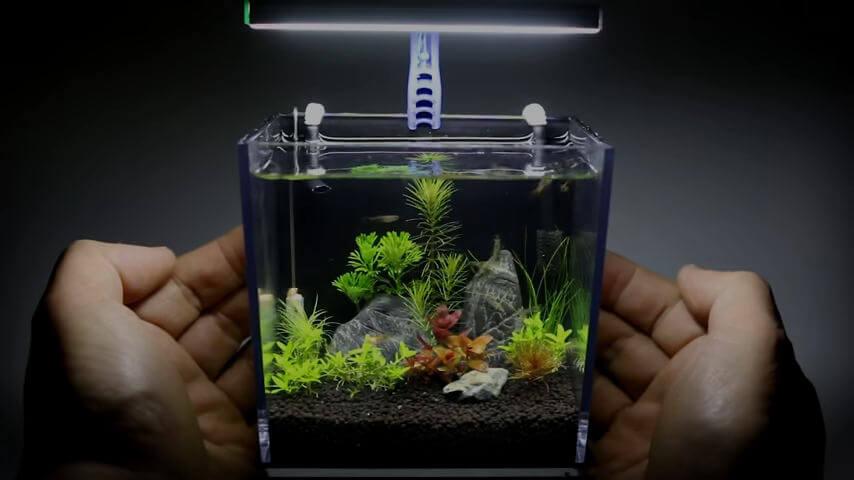 Pecera hecha con caja plástico GoPro