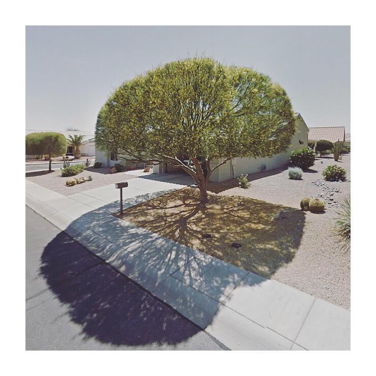 fotos de árboles