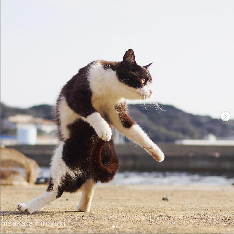 Gatos Ninjas Japoneses 2