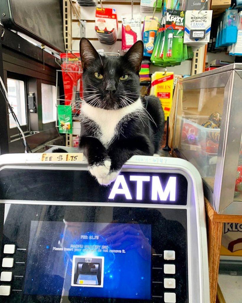 Gatos de Bodega Twitter ATM