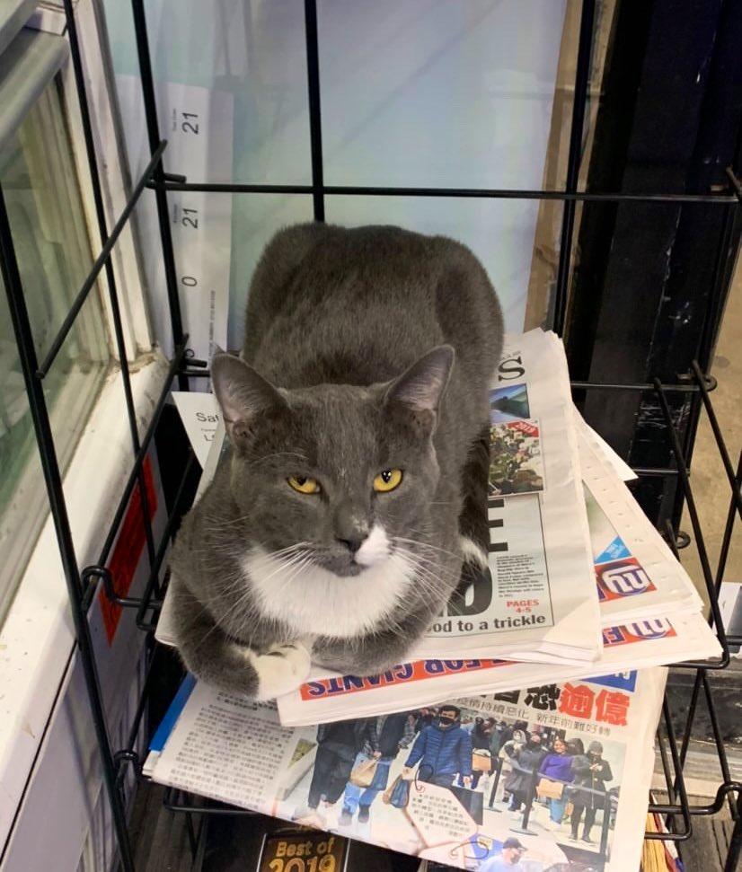 Gatos de Bodega Twitter periodico